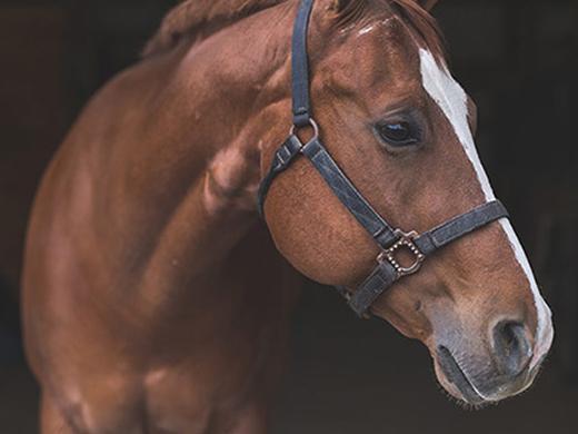 Articoli per cavalli: set sella, briglie, stinchiere e accessori