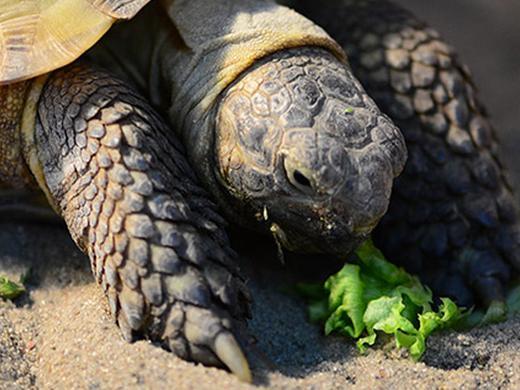 Articoli per tartarughe e rettili