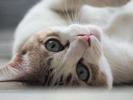 Articoli per gatti: cibo, tiragraffi, toelettatura e accessori