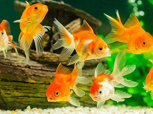 Articoli per pesci: acquari, mangime e accessori