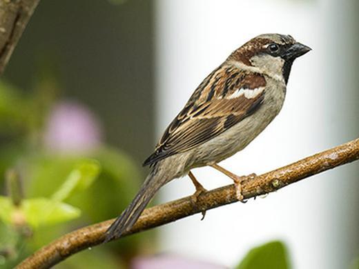 Articoli per uccelli: casetta, mangime, nido, giochi e accessori